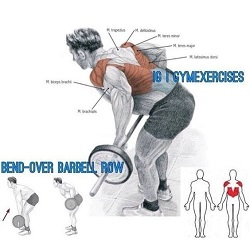 Muscles used when someone performs the bent over barbell row